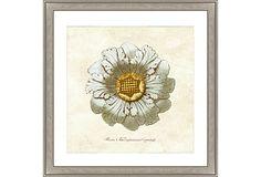 Spa Rosette Print II on OneKingsLane.com
