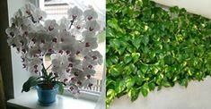 Rețeta celui mai natural îngrășământ pentru plante – flori bogate și frunze dense!