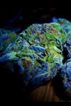 Ganja bluedream weed dank #The best seeds #http://www.spliffseeds.nl/silver-line/blue-berry-seeds.html #cannarebel