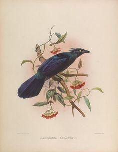 A Monograph of the Paradiseidae or Birds of Paradise, Daniel Giraud Elliot, 1873.