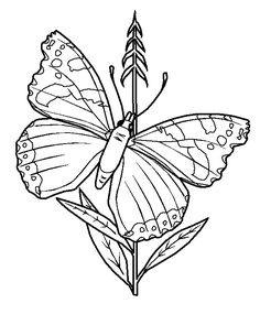 This Little Butterfly Is Resting On A Flower And Drinking The Nectar Easy To Print Color Page For Kids Great Fun