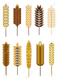 Illustration of Cereal icons with different designs of golden ears of wheat, barley and rye, vector illustration isolated on white vector art, clipart and stock vectors. Seed Illustration, Digital Illustration, Vector Design, Vector Art, Graphic Design, Vector Graphics, Rice Packaging, Signage Design, Banner Printing