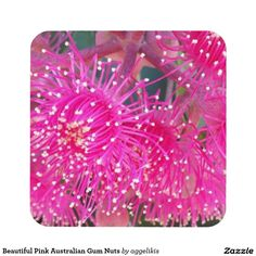 Beautiful Pink Australian Gum Nuts Coasters