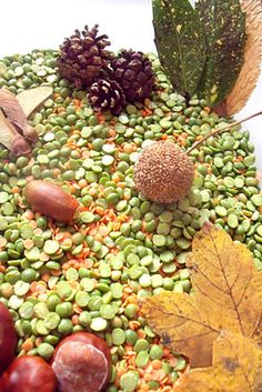 lentils and dried beans make a great base for a fall sensory bin