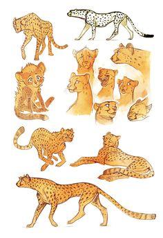 Cheetah sketches by Drkav.deviantart.com on @DeviantArt