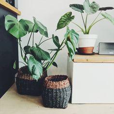 On joue la tendance jungle tropicale en multipliant les plantes d'intérieur tropicales agrémentées de jolis paniers Decoration, Mood, Plants, Linens, Home Decoration, Tropical Interior, Tropical Plants, Baskets, Decor