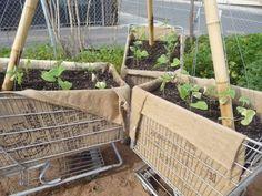 shopping cart garden
