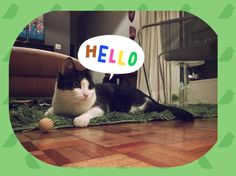 Madá says - Hello, my name is Madalena, whats is your name? Your Name, My Name Is, Say Hello, Animals, Photos, Animais, Animales, Animaux, Animal
