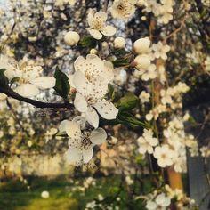Perchè il fiore che cresce nelle avversità è il piú raro e il piú bello di tutti. Ciao Primavera!