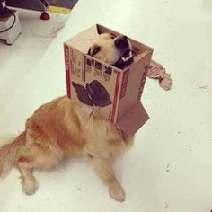 This dog literally doesn't care about his cardboard turtleneck. | There's A Facebook Page About Animals Getting Stuck In Objects And It's Gold