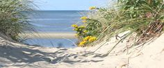 Beaches of Cape Cod- great directory that tells you about all of the beaches on the Cape.