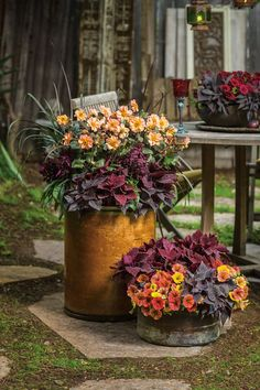 Fall container gardening, flowers ornamental cabbage ...