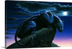 Chris Hiett Premium Thick-Wrap Canvas Wall Art Print entitled Panther on Rock, None