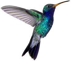 55 Amazing Hummingbird Tattoo Designs « Cuded – Showcase of Art Image Source hummingbird tattoo small hummingbird tattoos Bing Images . Illustration Colibri, Hummingbird Illustration, Vogel Silhouette, Small Hummingbird Tattoo, Hummingbird Drawing, Hummingbird Pictures, Watercolor Hummingbird, Rabe Tattoo, Tatoo 3d