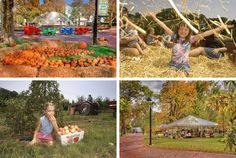Roundup: A Guide To Harvest Festivals In Philadelphia And The Countryside This Fall