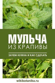 Garden Paths, Garden Landscaping, Grafting Plants, Bottle Garden, Container Gardening Vegetables, Vegetable Garden Design, Healing Herbs, Farm Gardens, Organic Farming