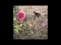 Hurt (Part 3)! Cats surrendered by attacks of flying bird! Nỗi Đau (Phần...
