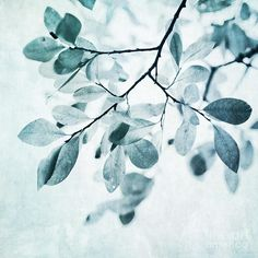 Leaves In Dusty Blue Print by @priskawettstein on Fine Art America
