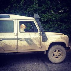 #labrador #defender #landrover #landroverdefender #landroverphotos #labsofinstagram #mud #dogsofinstagram #dogs #dogsrule #love #labsofinstagram  #photo #photooftheday  #lovelife by alliellul90 #labrador #defender #landrover #landroverdefender #landroverphotos #labsofinstagram #mud #dogsofinstagram #dogs #dogsrule #love #labsofinstagram  #photo #photooftheday  #lovelife