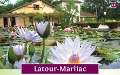 Monet garden and waterlily nursery in Le Temple-sur-Lot