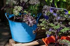 growing vegetables on a patio - Google Search