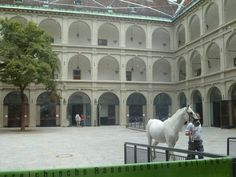 . Revelation 19 11, Lipizzan, Spanish Riding School, Horse Photos, Adventure Travel, Training, Paintings, Horses, Pets