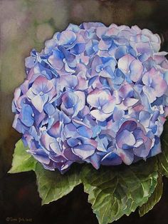 Flower Painting in Watercolor of a blue Hydrangea