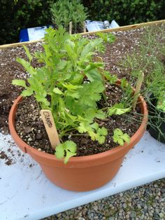 Learn how to plant an edible herb garden that will help you enjoy fresh herbs all season!