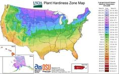 The USDA Plant Hardiness Zone Map helps gardeners determine which plants will thrive in their location. Find plants for your USDA Zone here. Planting Zones Map, Plant Zones, Gardening Zones, Planting Seeds, Container Gardening, Gardening Tips, Flower Gardening, Growing Zones Map, Permaculture Garden