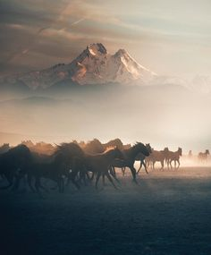 Horses running in mountain mist.