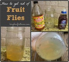 How to Get Rid of Fruit Flies || Kingdom First Mom