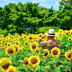 #howisummer in fields of sunshine with @life_in_tokyo via @dametraveler