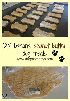 Homemade Dog Food homemade banana peanut butter dog treats - Here's a simple recipe for making homemade banana peanut butter dog treats! Peanut Butter Dog Treats, Homemade Peanut Butter, Peanut Butter Banana, Homemade Dog Cookies, Homemade Dog Food, Homemade Recipe, Homemade Dog Biscuits, Diy Dog Treats, Healthy Dog Treats