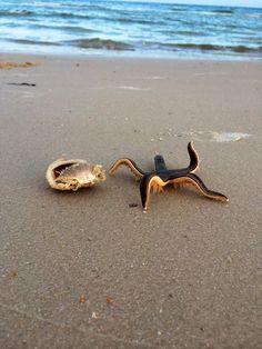 A live starfish on the beach! - Imgur