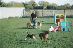 Korral Dog Training & Supply Center offers the best Sarasota dog training and boarding services. We treat your dogs as one of our own! Dog Training Classes, Pet Store, Your Dog, Pets