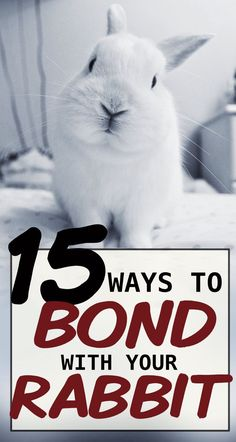 15 Ways To Bond With Your Pet Rabbit - Rabbits are incredibly social animals. To live a happy and healthy life, they need time to socializ - Mini Lop Bunnies, Pet Bunny Rabbits, Holland Lop Bunnies, Pet Rabbit, Baby Bunnies, Cute Bunny, Mini Lop Rabbit, Dwarf Bunnies, Rabbit Behavior