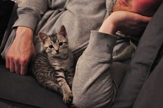 my two favorite things in one picture - kittens and cute boys ;sldah