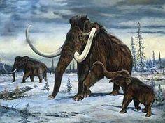 _mamut