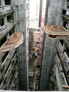 tobias revell: power generating mushrooms in mumbai