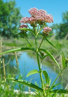 Leafhopper, Plants, Planters, Plant, Planting