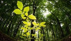CO2 sorgt für den Klimawandel - doch gleichzeitig lässt es verstärkt Pflanzen wachsen. Satellitendaten zeigen: Die Erde ergrünt.