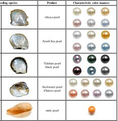 Different types of pearl producing species (first two columns), trade names of their pearls (third column) and characteristic color nuances of the pea.