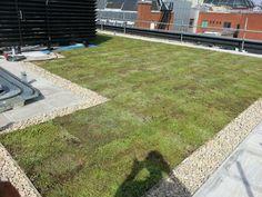 green roof clean crisp