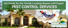 FLEXT Blog - If you're having problems with love-bugs in Florida, you may need to look into pest control services.http://www.florida-environmental.com/get-ready-florida-lovebug-season-expert-pest-control-services/