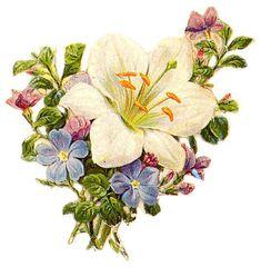 Flowers453