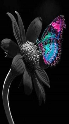 We see in color, and we think in black and white./Vediamo a colori e pensiamo in bianco e nero. Butterfly Wallpaper, Butterfly Flowers, Love Wallpaper, Beautiful Butterflies, Splash Photography, Color Photography, Black Backgrounds, Wallpaper Backgrounds, Wallpapers