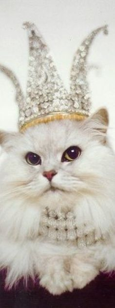 Cats in Tiaras. I Love Cats, Cute Cats, Funny Cats, Crazy Cat Lady, Crazy Cats, Here Kitty Kitty, Cats And Kittens, Cats Meowing, Fur Babies