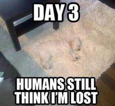 Have you seen the dog dear???