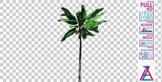 Banana Plant Tree