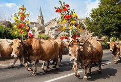 France, Aveyron, Saint-Côme-d'Olt Beaux Villages, Cows, Folklore, Saint, Bloom, France, Culture, Animals, Most Beautiful Cities